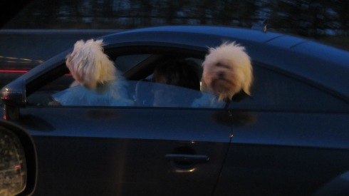 Whizzing Dogs!